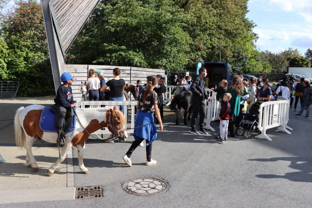 Balade en poney à Montfermeil